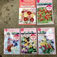 種まき 先日ダイソーさんでお花🌼🌸の種を購入して…(2枚目)