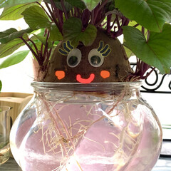 さつま芋🍠/水栽培/お家でもオシャレ さつま芋🍠の水栽培が もっと楽しくなるよ…(1枚目)