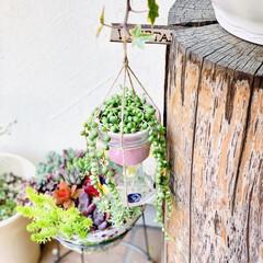 グリーンネックレス/デコパージュ/ハンドメイド/ガーデニング/花のある暮らし/ガーデン雑貨/... グリーンネックレスを玄関先に 手作りビオ…(8枚目)