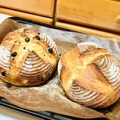 プレーン/パン製作/ブルーベリー/カンパーニュ/自家製天然酵母/グルメ/... 🥐自家製天然酵母パン    ミニカンパー…(6枚目)