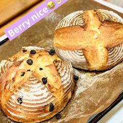 プレーン/パン製作/ブルーベリー/カンパーニュ/自家製天然酵母/グルメ/... 🥐自家製天然酵母パン    ミニカンパー…(5枚目)
