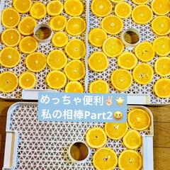 フードドライヤー/オレンジ/ドライフルーツ/ハンドメイド/手作り/ハンドメイド作品/... さっき輪切りにしたオレンジ🍊を  私の相…(2枚目)