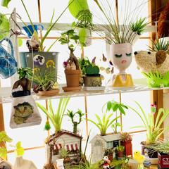 紙粘土/オブジェ/造形モルタル/¥100均/インテリア/ハウス寄せ植え/... 和室に観葉植物を集合してから すくすく元…(3枚目)