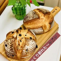 プレーン/パン製作/ブルーベリー/カンパーニュ/自家製天然酵母/グルメ/... 🥐自家製天然酵母パン    ミニカンパー…(2枚目)
