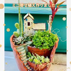 寄せ植え/雑貨/レトロ/アンティーク/北欧/多肉植物/... 🌵ミニ寄せ植え  可愛いい鉢を見つけた…