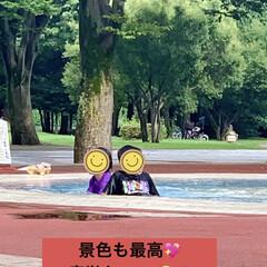 ハードな一日/孫孫ちゃんと遊ぶ/マイマイ池/中央公園 朝から遊びに来た孫孫ちゃん兄妹💦 ミラク…(3枚目)