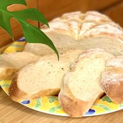 ブリエ/自家製天然酵母パン/手作りパン 自家製天然酵母パン💝ブリエ  カット🗡し…(3枚目)