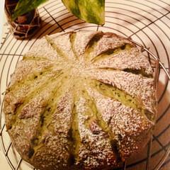 自家製酵母パン 自家製天然酵母パン 緑茶を使った 緑茶🍵…