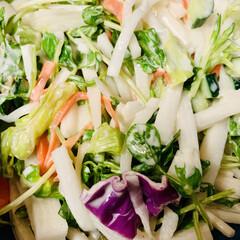 大根サラダ/豆苗/うちの定番料理 豆苗を初めて使ってみました^ ^ 豆苗を…