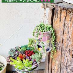 グリーンネックレス/デコパージュ/ハンドメイド/ガーデニング/花のある暮らし/ガーデン雑貨/... グリーンネックレスを玄関先に 手作りビオ…(7枚目)