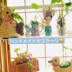 紙粘土/オブジェ/造形モルタル/¥100均/インテリア/ハウス寄せ植え/... 和室に観葉植物を集合してから すくすく元…(2枚目)