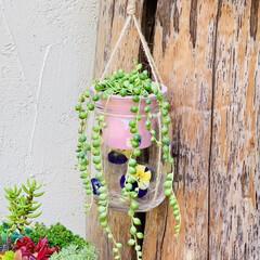 グリーンネックレス/デコパージュ/ハンドメイド/ガーデニング/花のある暮らし/ガーデン雑貨/... グリーンネックレスを玄関先に 手作りビオ…(6枚目)