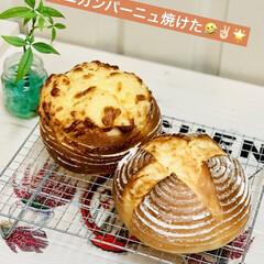 チーズ/カンパーニュ/自家製天然酵母パン/手作りパン/ハンドメイド/手作り/... たった今焼けました〜٩(^‿^)۶🥖🥐🍞…(1枚目)