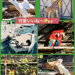 🎃カボチャパン👻/自然動物園 金曜日に娘方に ハロウィン🎃👻のカボチャ…