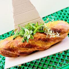 ガーデニング/インテリア/雑貨/フランスパン/造形モルタルパン型/ハンドメイド/... 造形モルタルフランスパン型 やっと💦やっ…(4枚目)
