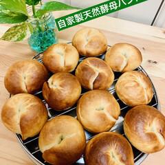 ベーグル🥯/自家製天然酵母パン 🥯good morning🥯  久しぶり…(5枚目)
