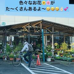 園芸店 今日は、園芸店へ行って来ました。 そこで…(5枚目)