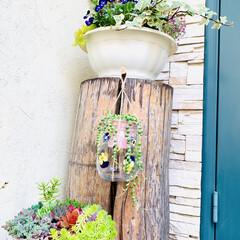グリーンネックレス/デコパージュ/ハンドメイド/ガーデニング/花のある暮らし/ガーデン雑貨/... グリーンネックレスを玄関先に 手作りビオ…(9枚目)
