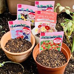 種まき 先日ダイソーさんでお花🌼🌸の種を購入して…(1枚目)
