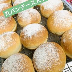 お持たせ/チーズ/丸パン/自家製天然酵母/手作りパン 2ラウンド目  丸パンチーズ入り👩🍳✨…(1枚目)