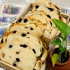 太麺/手作りパン/自家製天然酵母/グルメ/ブルーベリーフランス goodmorning🥖(2枚目)