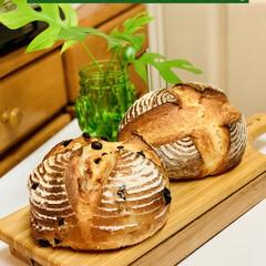 プレーン/パン製作/ブルーベリー/カンパーニュ/自家製天然酵母/グルメ/... 🥐自家製天然酵母パン    ミニカンパー…(1枚目)