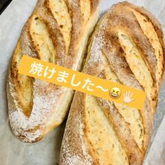 グラハム粉/自家製天然酵母パン 自家製天然酵母パン グラハムパン🥖 只今…