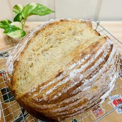 カンパーニュ/自家製天然酵母パン/うちの定番料理 おはようございます^ ^ 今朝は、 ライ…