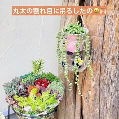 グリーンネックレス/デコパージュ/ハンドメイド/ガーデニング/花のある暮らし/ガーデン雑貨/... グリーンネックレスを玄関先に 手作りビオ…(5枚目)