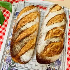 自家製天然酵母パン やっと焼けました焼きます*\(^o^)/…