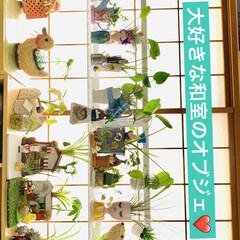紙粘土/オブジェ/造形モルタル/¥100均/インテリア/ハウス寄せ植え/... 和室に観葉植物を集合してから すくすく元…(4枚目)