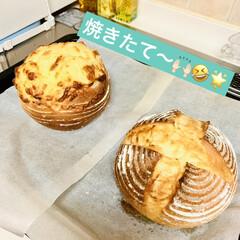 チーズ/カンパーニュ/自家製天然酵母パン/手作りパン/ハンドメイド/手作り/... たった今焼けました〜٩(^‿^)۶🥖🥐🍞…(4枚目)
