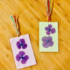 ラミネーター/100均/ダイソー/セリア/商品紹介/商品レビュー/... 和紙に紫陽花をのせて💕 ラミネーターでし…