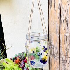 グリーンネックレス/デコパージュ/ハンドメイド/ガーデニング/花のある暮らし/ガーデン雑貨/... グリーンネックレスを玄関先に 手作りビオ…(3枚目)