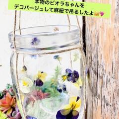 グリーンネックレス/デコパージュ/ハンドメイド/ガーデニング/花のある暮らし/ガーデン雑貨/... グリーンネックレスを玄関先に 手作りビオ…(2枚目)