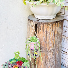 グリーンネックレス/デコパージュ/ハンドメイド/ガーデニング/花のある暮らし/ガーデン雑貨/... グリーンネックレスを玄関先に 手作りビオ…(4枚目)