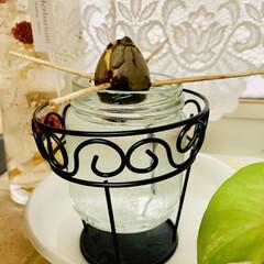さつま芋🍠水栽培/アボガド水栽培/お家でもオシャレ アボガドとさつま芋🍠の 水栽培の途中経過…(3枚目)