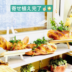 ガーデニング/インテリア/雑貨/フランスパン/造形モルタルパン型/ハンドメイド/... 造形モルタルフランスパン型 やっと💦やっ…(2枚目)