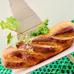 ガーデニング/インテリア/雑貨/フランスパン/造形モルタルパン型/ハンドメイド/... 造形モルタルフランスパン型 やっと💦やっ…(5枚目)