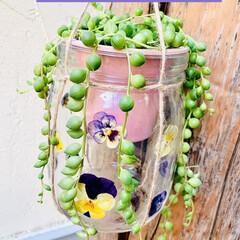 グリーンネックレス/デコパージュ/ハンドメイド/ガーデニング/花のある暮らし/ガーデン雑貨/... グリーンネックレスを玄関先に 手作りビオ…(1枚目)