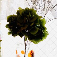空き瓶/デコパージュ/キバナコスモス 今は、 キバナコスモスがあちこちに咲いて…