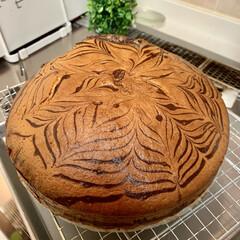手作りケーキ ゼブラ🦓ケーキを焼きました〜🎀 ヨーグル…