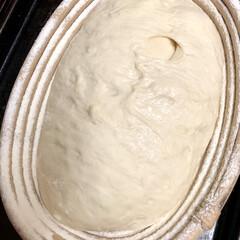 自家製天然酵母パン 自家製天然酵母パン ただ今 第二次発酵中…