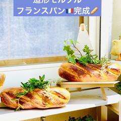 ガーデニング/インテリア/雑貨/フランスパン/造形モルタルパン型/ハンドメイド/... 造形モルタルフランスパン型 やっと💦やっ…(1枚目)