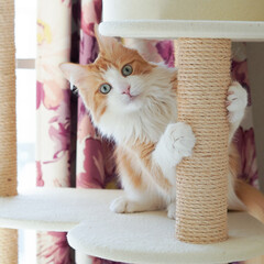 猫/ひょっこりはん/ひょっこり/キャットタワー/ペット ひょっこりニャン♡