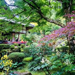 京都/癒し/女子旅/旅 大人旅 秋の遠足…今年は大原三千院