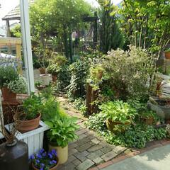 ガーデニング 今朝の庭 春の新緑がいい感じ~