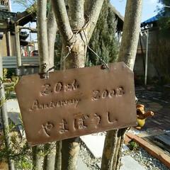 ガーデニング/シンボルツリー/銅板/やまぼうし/ハンドメイド/DIY 我が家のシンボルツリー やまぼうし 銅板…
