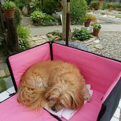 「お庭でお昼寝🎶」(2枚目)