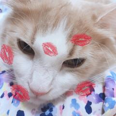 甘えん坊猫/にゃんこ同好会 甘えん坊のふうは今日もベッタリ😻 お母し…